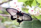hình ảnh con bướm đẹp