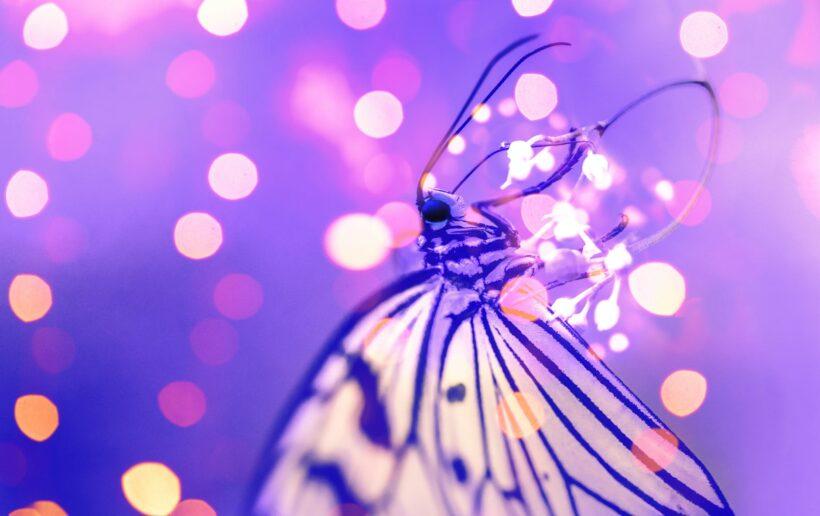 hình ảnh con bướm đẹp lung linh