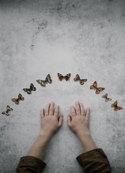hình ảnh con bướm và đôi bàn tay