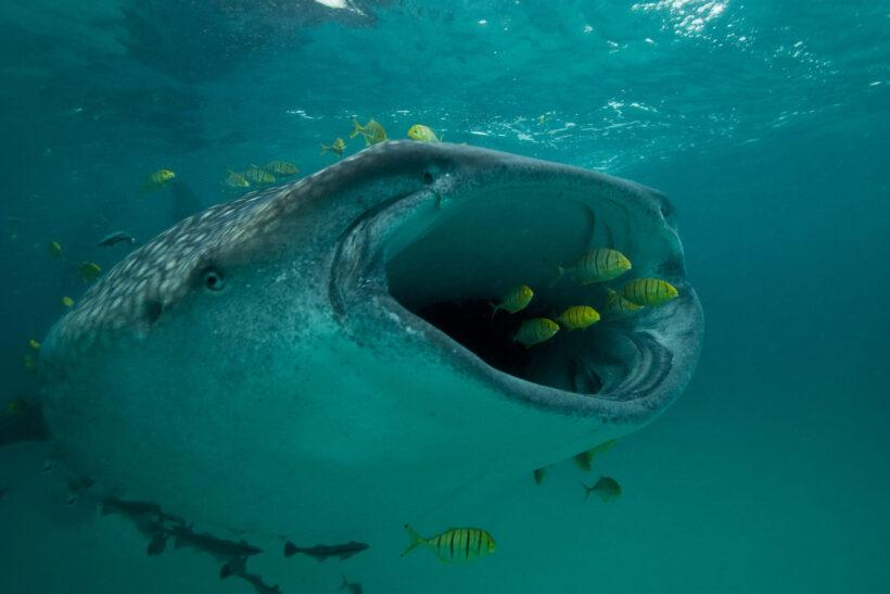 hình ảnh con cá lớn nuốt cá bé