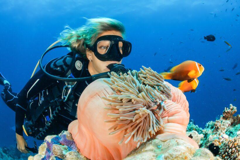 hình ảnh con cá và thợ lặn