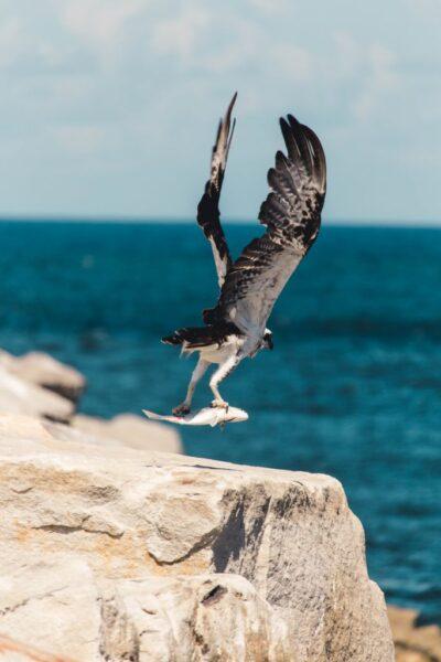 hình ảnh con chim bắt cá
