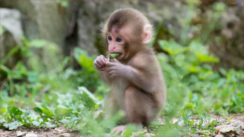 hình ảnh con khỉ dễ thương đang ăn