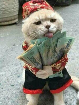 hình ảnh con mèo ôm tiền 500k Việt Nam
