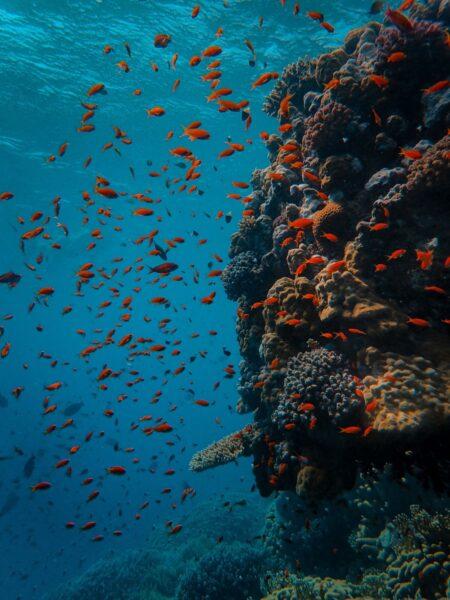 hình ảnh đàn cá dưới đáy đại dương