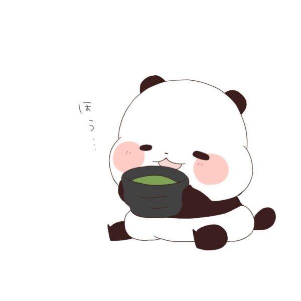 hình ảnh gấu trúc cute đáng yêu nhất đang ăn cháo