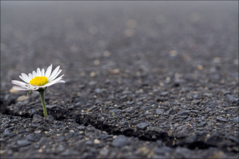 hình ảnh hy vọng bông hoa mọc giữa đường