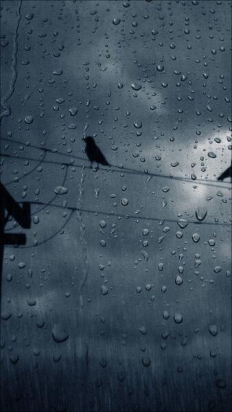 hình ảnh mưa đẹp buồn lãng mạn chú chim cô đơn