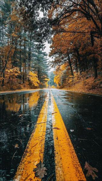 hình ảnh mưa đẹp buồn lãng mạn con đường lá vàng