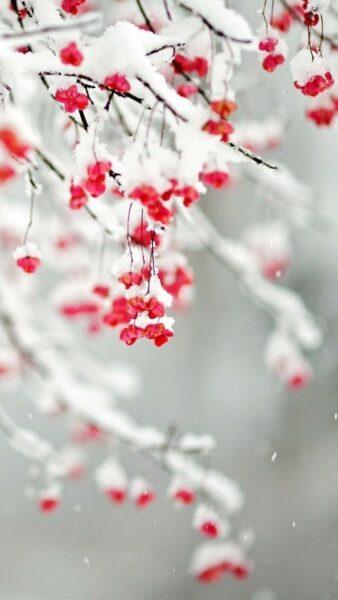 Hình ảnh tuyết rơi tạo thành lớp băng bám trên cây