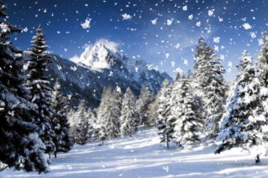 Hình ảnh tuyết rơi trên cây thông