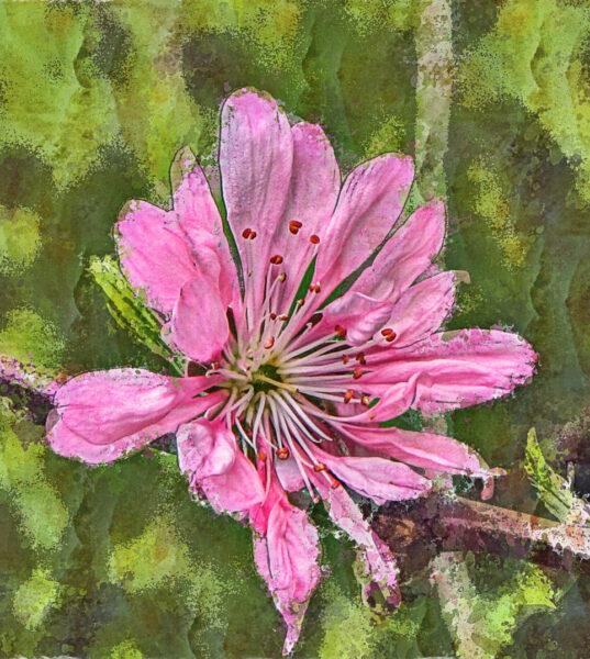 Hình vẽ đề tài mùa xuân và hoa