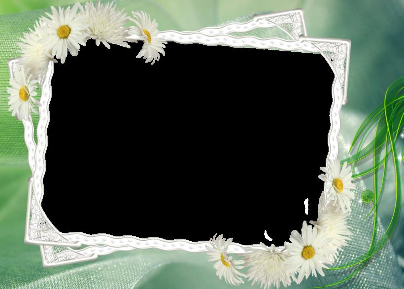 Khung hình đẹp hoa cúc họa mi