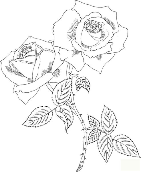 Mẫu tập tô hoa hồng