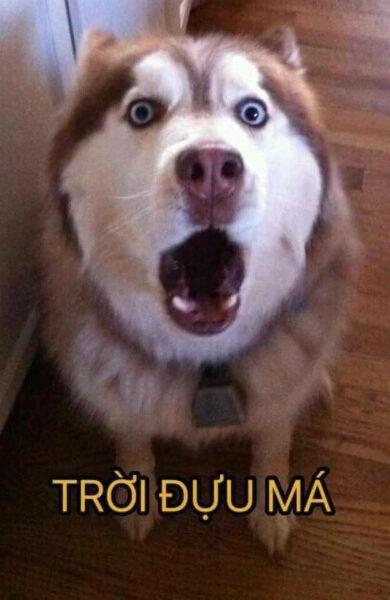 tải hình ảnh hài hước về con chó