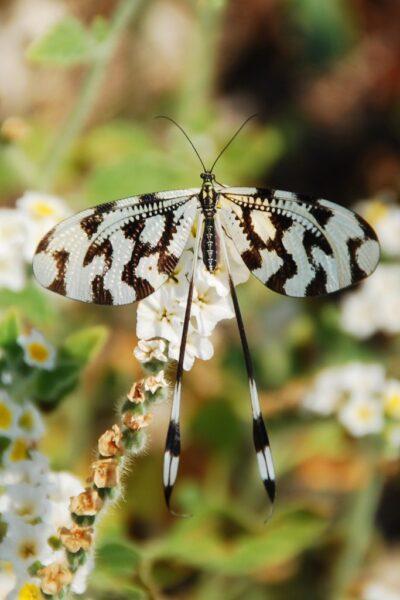 tổng hợp hình ảnh con bướm đẹp