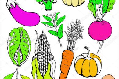 Tranh tập tô các loại rau củ quả