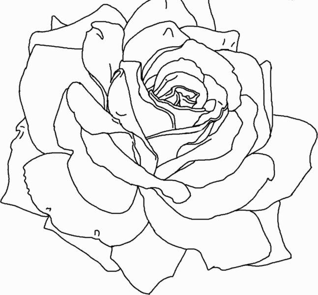 Tranh tô màu bông hoa hồng đẹp