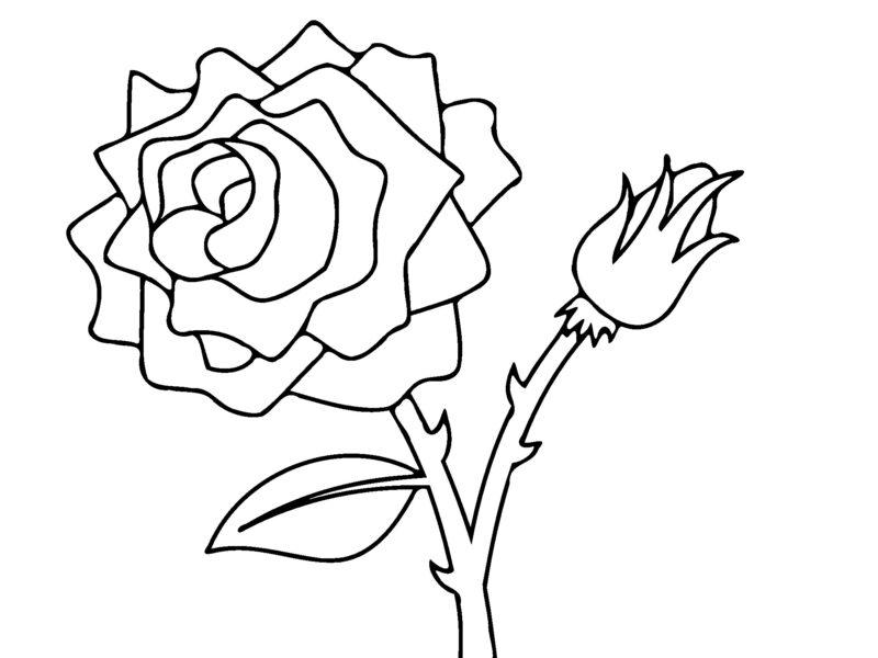 Tranh tô màu bông hoa và nụ hồng