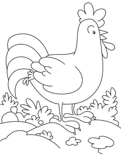 Tranh tô màu chú gà trống cho bé gái 7 tuổi