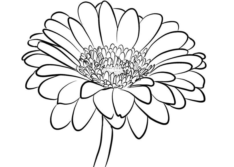 tranh tô màu hình bông hoa cho bé tập tô