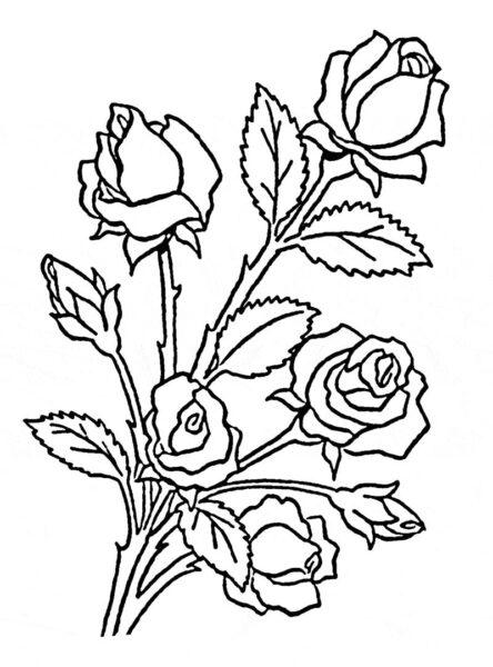 Tranh tô màu khóm hoa hồng cho bé tập tô