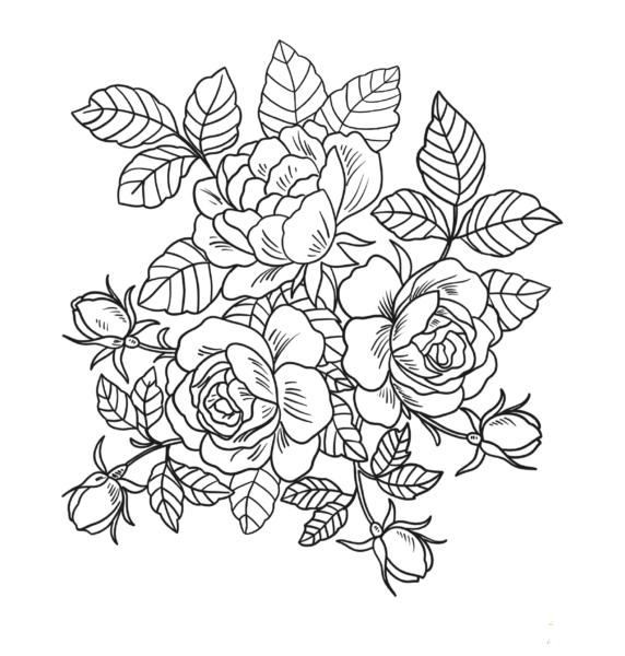 Tranh tô màu khóm hoa hồng đẹp nhất