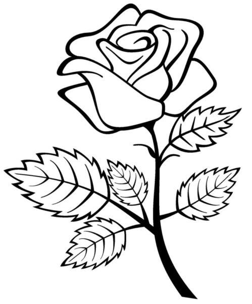 Tranh vẽ đen trắng bông hoa hồng