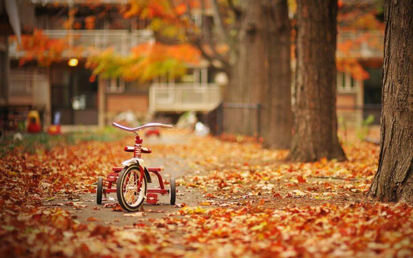 ảnh chiếc xe đạp và lá vàng mùa thu