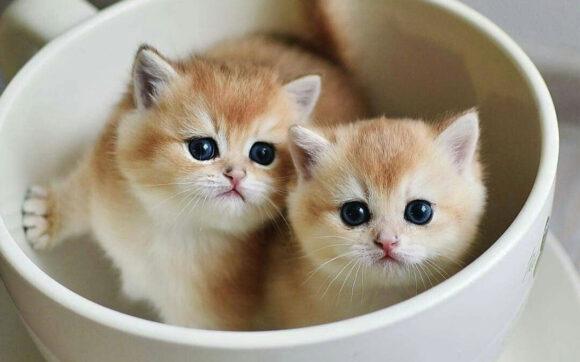 ảnh mèo dễ thương cute nhất