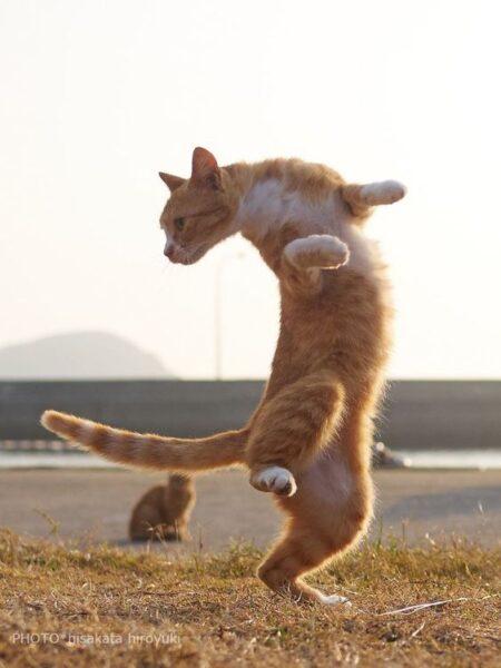 ảnh mèo tập võ túy quyền cười đau bụng