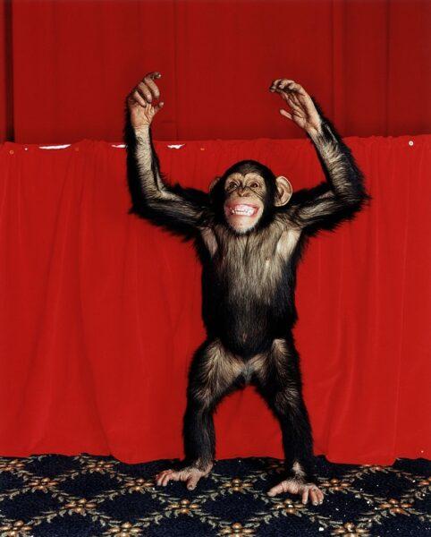 chú khỉ làm trò - hình ảnh con khỉ dễ thương