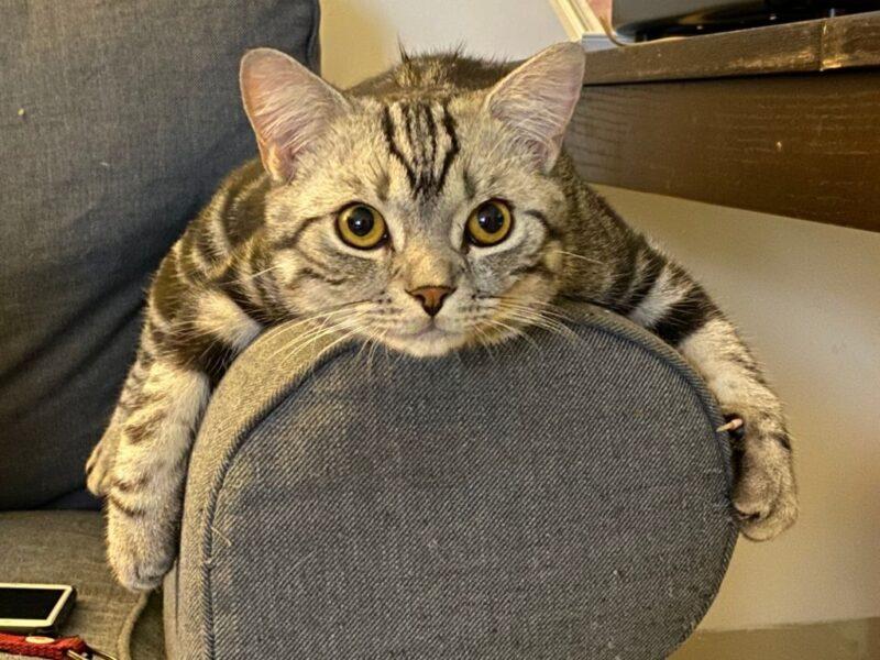 chú mèo lười biến - hình ảnh cười đau bụng