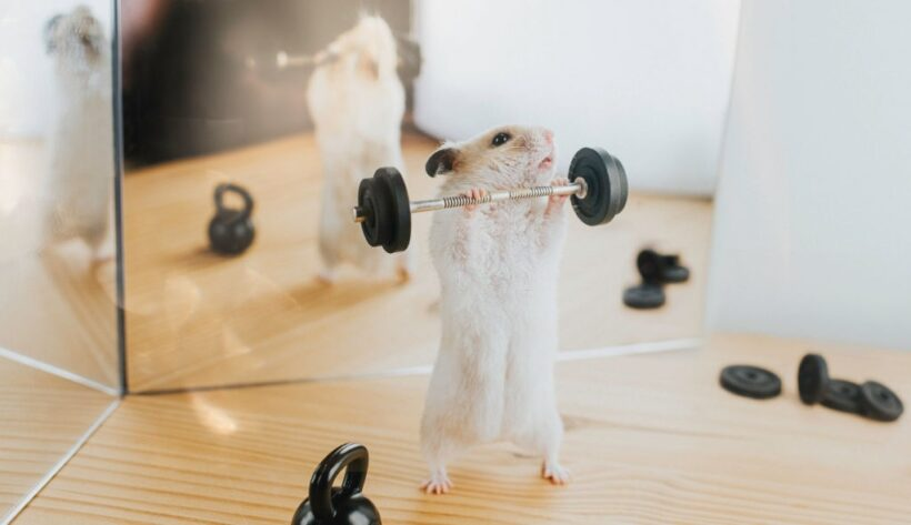 chuột tập tạ - hình ảnh cười đau bụng