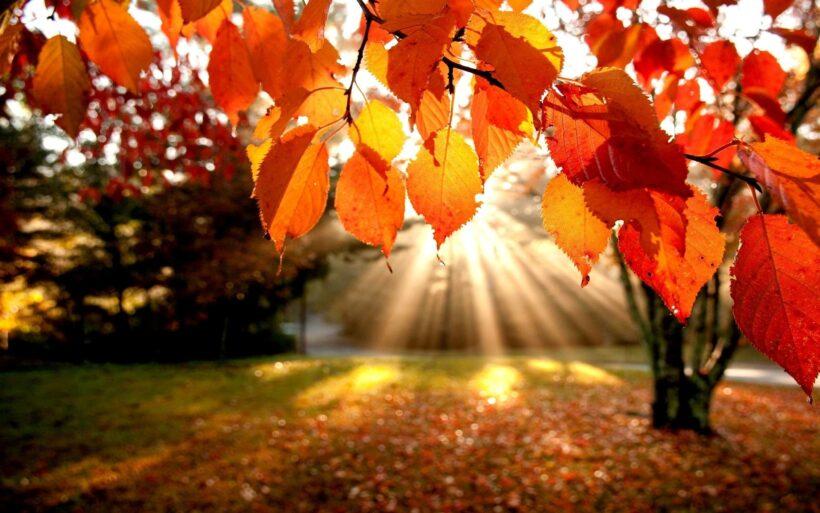 hình ảnh ánh nắng ngày thu