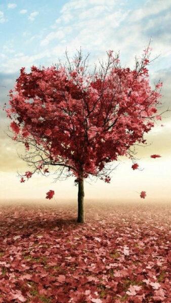hình ảnh cây mùa thu độc đáo