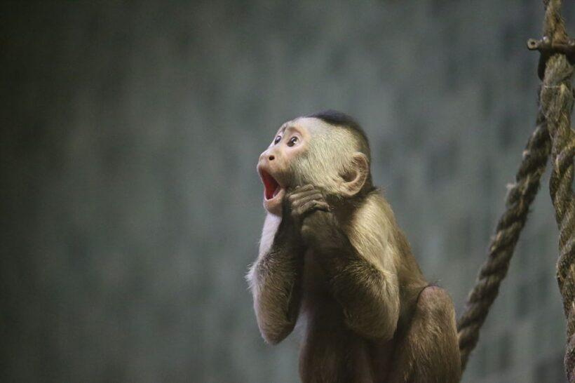 hình ảnh con khỉ dễ thương - biểu cảm đáng yêu