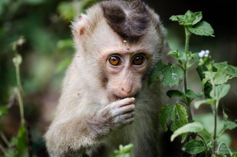 hình ảnh con khỉ dễ thương cận cảnh