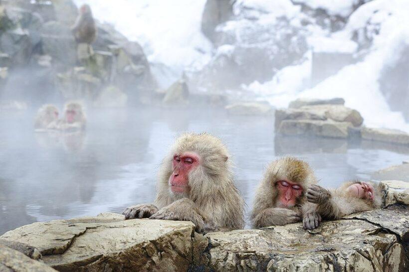 hình ảnh con khỉ dễ thương đang tắm