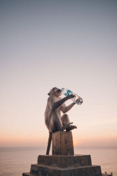hình ảnh con khỉ dễ thương đang uống nước