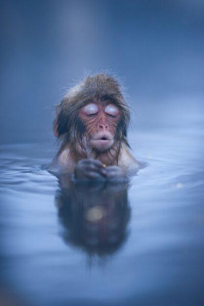 hình ảnh con khỉ dễ thương ngâm mình trong nước