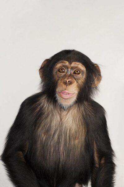 hình ảnh con khỉ dễ thương ở trạng thái kinh ngạc