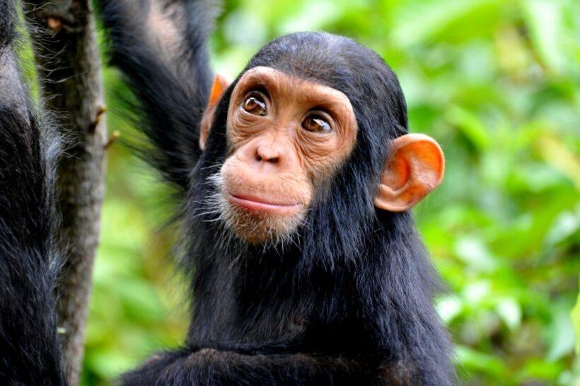 hình ảnh con khỉ dễ thương và cute