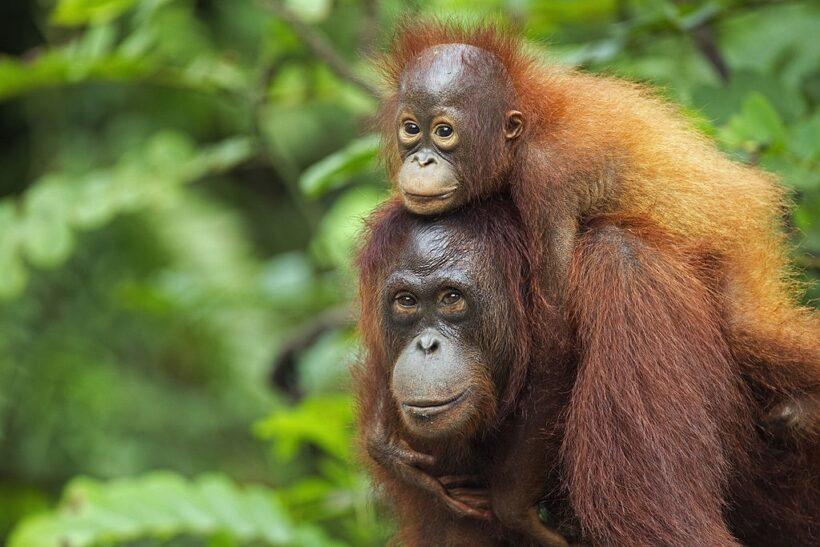 hình ảnh con khỉ dễ thương và đáng yêu