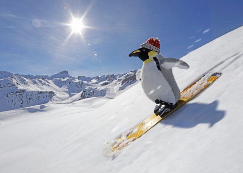 hình ảnh cười đau bụng chim cánh cụt trượt tuyết