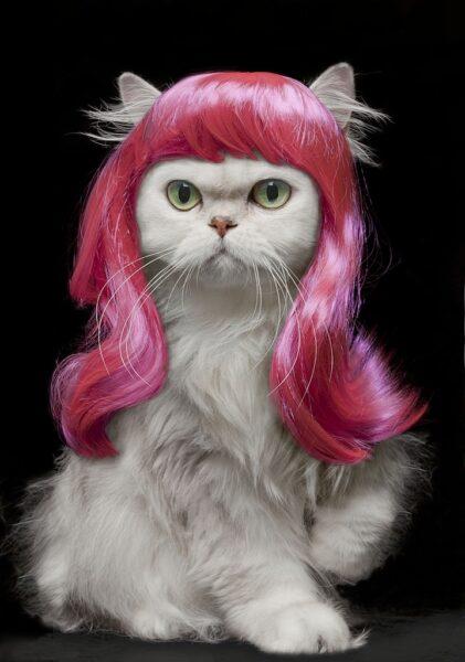 hình ảnh cười đau bụng chú mèo tóc hồng