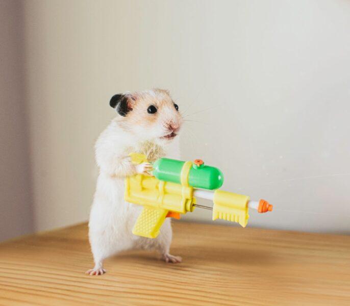 hình ảnh cười đau bụng hình chuột hamster