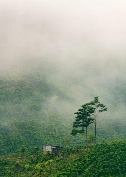 hình ảnh đà lạt cảnh đồi núi xanh ngắt
