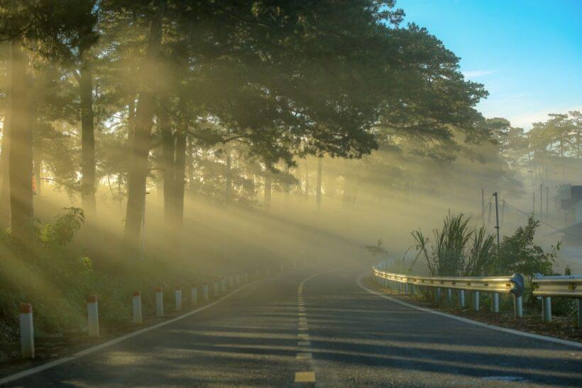 hình ảnh đà lạt - đường thông mờ sương