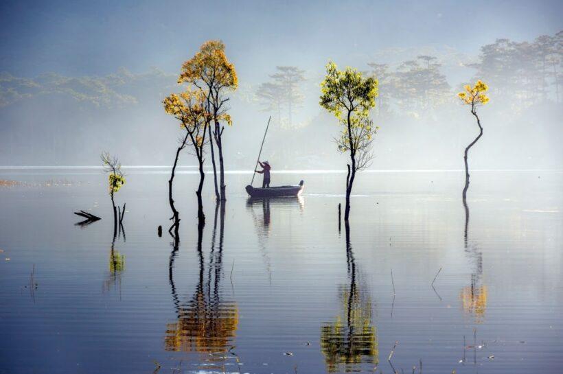 hình ảnh đà lạt - rừng ngập nước hồ Tuyền Lâm